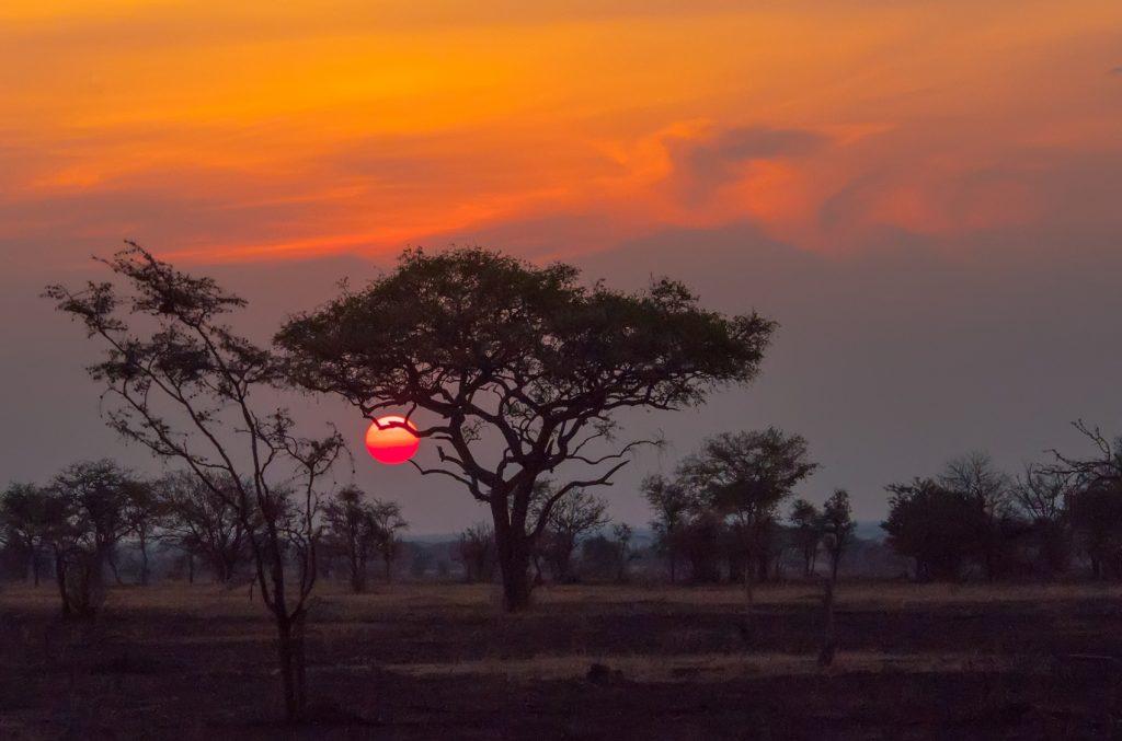 TULIP spreading to Africa